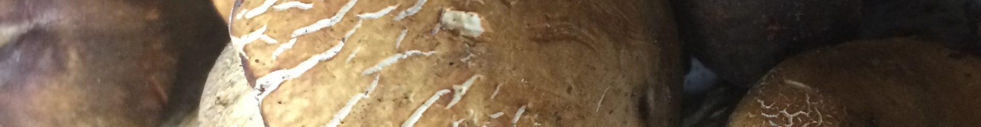 Specialità funghi porcini